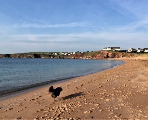 South Devon dog-friendly beaches