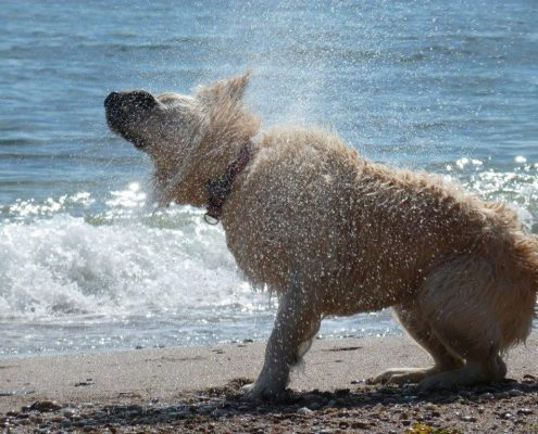 dog friendly beaches south hams
