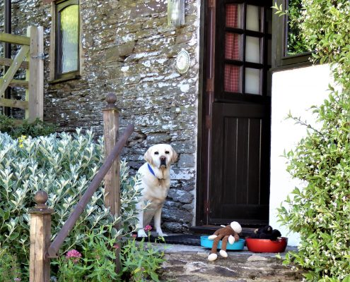 Dog friendly cottage at Dittiscombe