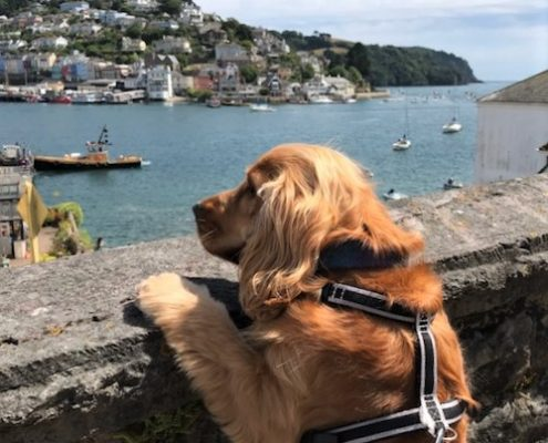 Dog-friendly Dartmouth South Devon