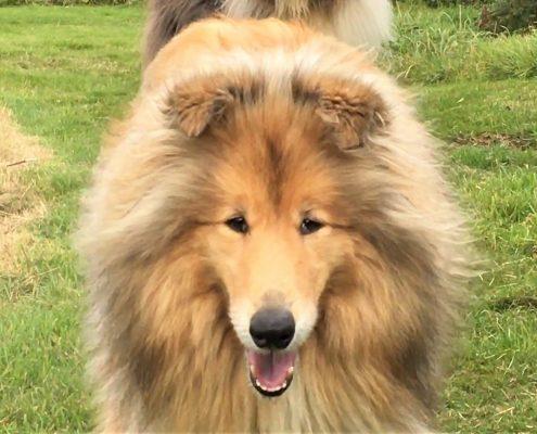 Dog walks around Dittiscombe Estate & Cottages