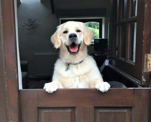 Dog friendly Honeysuckle at Dittiscombe Estate, South Devon