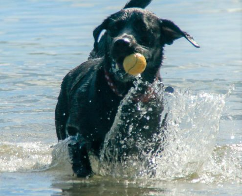 Dogs welcome on beaches in South Hams