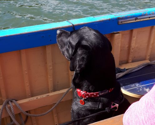 Dogs welcome on board, South Devon