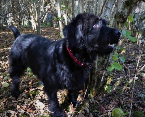 Dog friendly woodland at Dittiscombe Holiday Cottages