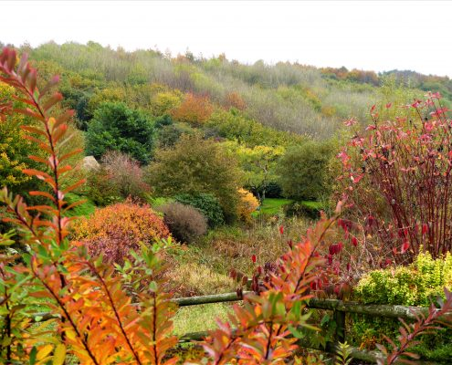 Autumn colours in the conservation valley at Dittiscombe, South Devon