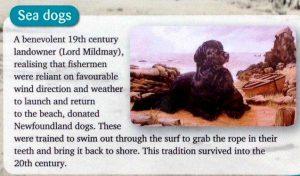 Sea Dogs Storyboard