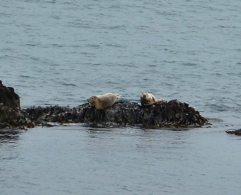 Seals at Start Point